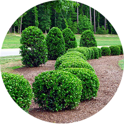 Naturally Green's tree and shrub care program keeps your entire landscape healthy and lush.