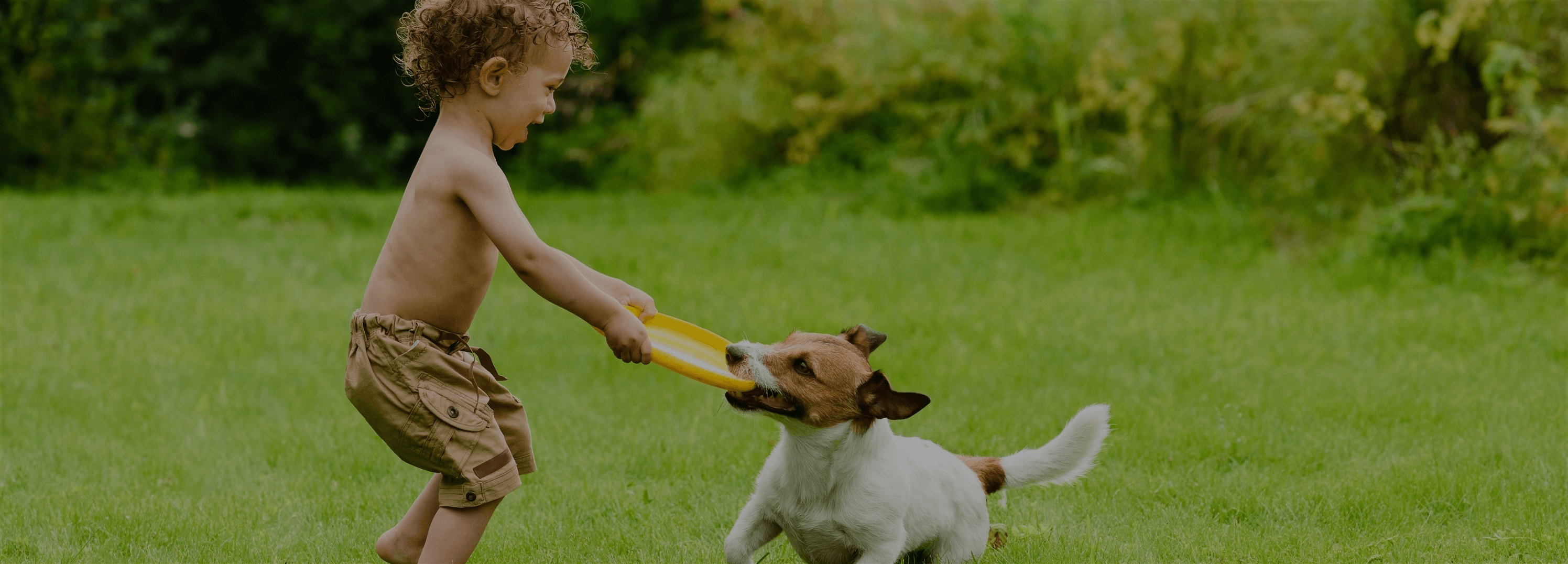 Flea & Tick Spray for Your Yard by Naturally Green