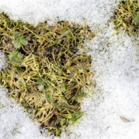 Winter Showdown: Ice Melt Products vs Your Lawn!