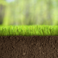 Your Lawn's Soil pH Level & Corrective Lime Treatments