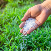 4 Common Mistakes on Fertilizing Your Lawn