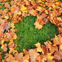 Five Ways To Get Rid Of Fall Leaves Without Burning