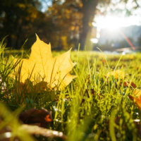 Fall Lawn Care: Prepare Your Connecticut Lawn for Fall With These 5 Tips