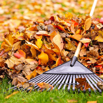 fall lawn care means raking your lawn
