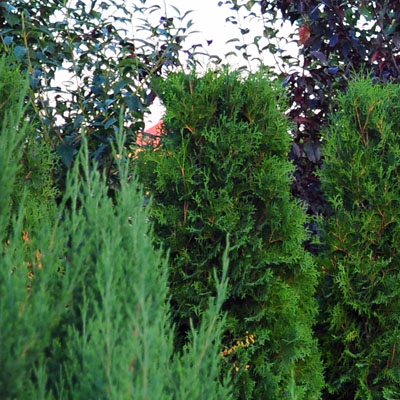trees and shrubs in CT