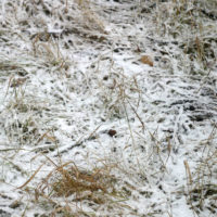 How To Identify And Prevent Snow Mold From Damaging Your Lawn This Winter