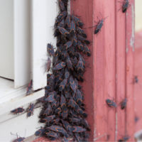 Fall Pest Prevention: Keep Pests Out of Your Home This Fall