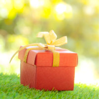Best Holiday Gifts for Lawn Lovers: Lawn Care Services From Naturally Green Lawn Care