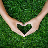 The Top 3 Lawn Care Tips for the New Year