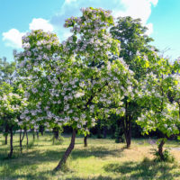 Flowering Trees to Add Beauty to Your Connecticut Lawn