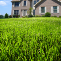Spring Weed Control Tips For Connecticut Lawns