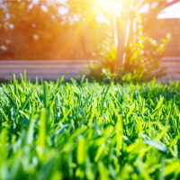 How Aeration and Overseeding Will Boost Lawn Health