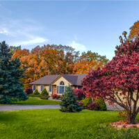 Cool-Season Greenery Care: Protecting Your Trees and Shrubs