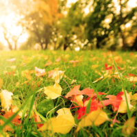 November Lawn Care Tips for Your Connecticut Lawn